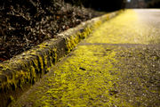 What's the best way to prevent moss on driveways? Ask an expert