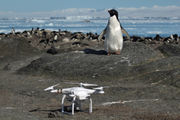 LSU scientists 'discover' 1.5 million penguins on Antarctic isles