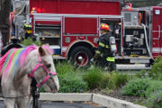 Rainbow-maned pony rescued as flames rip through truck (PHOTOS)