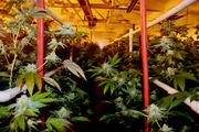 What we've learned from three years of legal marijuana