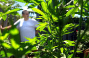 Q&A: Elders in Colorado study used marijuana for pain, anxiety, depression