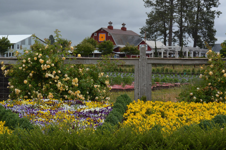 Blooming Junction Farm And Garden In Cornelius Is Sure To Become A Pacific Northwest Destination Nursery Photos By Marcia Westcott Peck