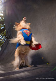Dogs and Halloween costumes: What more do you need?