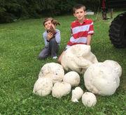 Upstate NY wild edible mushroom mania (reader photos)