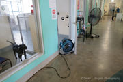 Without working AC, PAWS animal shelter fights the heat with industrial fans and ice packs