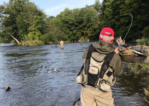 The annual fall salmon run on Lake Ontario tributaries along the south shore has kicked into gear. From the Salmon and Oswego rivers to Lower Niagara River -- anglers are landing big Chinook and coho salmon, along with the occasional steelhead and brown trout. In the above photo, Jim Sollecito, of Onondaga Hill, N.Y. battles a Chinook on the Douglaston Salmon Run on the Salmon River.