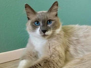 Area pets up for adoption August 1, 2018 (PHOTOS)