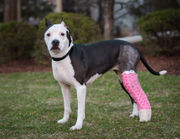 N.J. pets in need: May 14, 2018