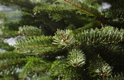 Forget these myths if you want to keep cut Christmas trees fresh