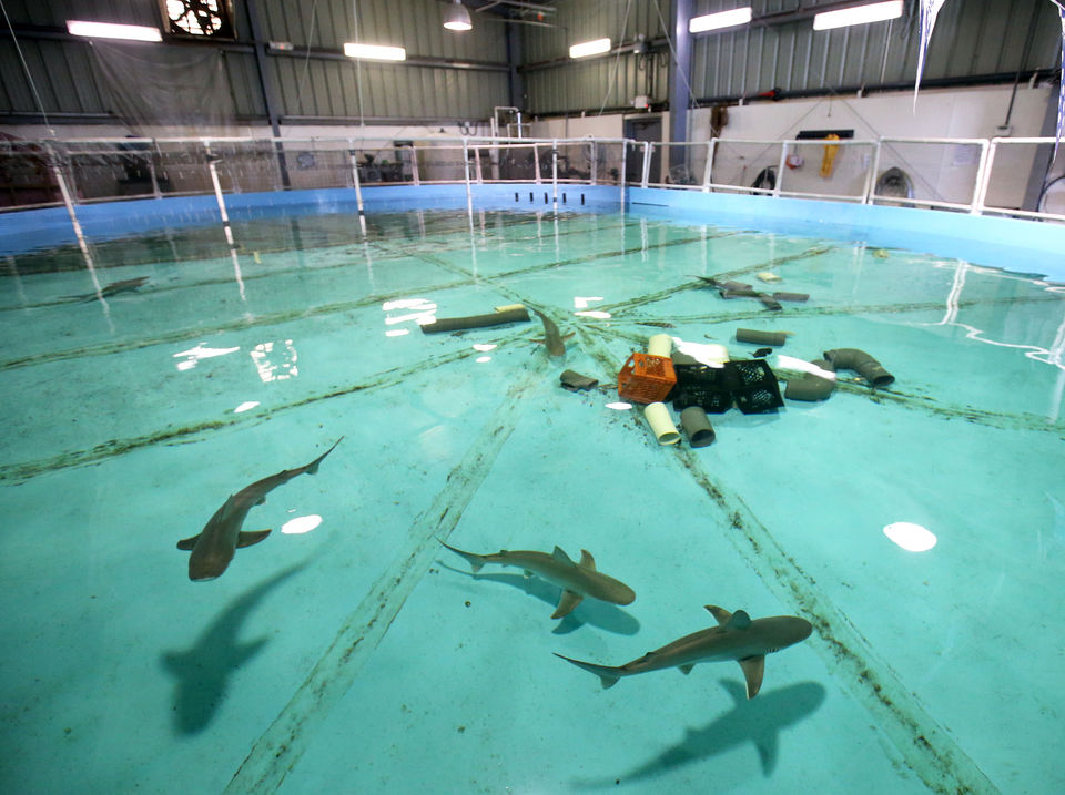 You doo-doo-doo need to see these baby sharks at this N J