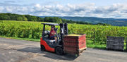 Harvest time in Upstate NY vineyards: How will 2018's wine turn out? (photos, video)
