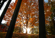 These images show the beauty of fall foliage at its peak in the Lehigh Valley