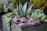 Garden gone to pot? With container planting, that's a good thing