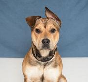 Area pets up for adoption April 11 (PHOTOS)
