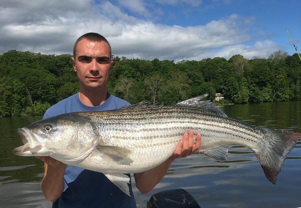 2018 Hudson River striped bass fishing action kicks into
