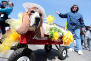 500 bassets with ears flapping, drool flying, take over Ocean City boardwalk (PHOTOS)