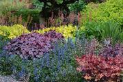 Ever-evolving heucheras thrive in Northwest gardens: The Pecks