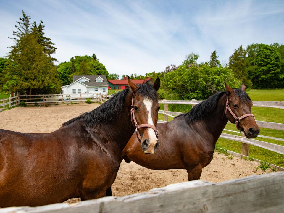 Meet the horses of Mackinac Island's Grand Hotel
