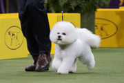 What channel is Westminster Dog Show? TV, time, streaming info for best in show