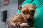 25 dogs rescued from Ewing home after being hoarded for a year