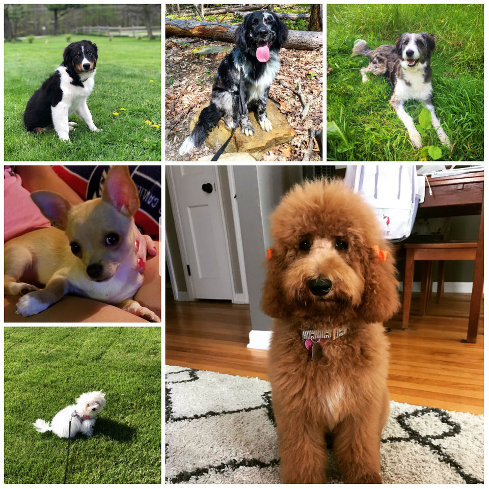 Meet puppies competing in Cleveland's Cutest Puppy Contest (first 27 puppies named Ace-Bear)