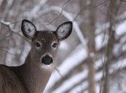 Where in Upstate NY are you most likely to hit a deer? 49 towns Bambi should avoid