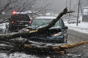Scary moment as snow, wind brings tree down on Route 31