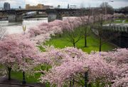 Portland ranked among nation's top moving destinations