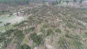 Hurricane Michael may cost Alabama farmers $204 million