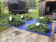 Police uncover large marijuana grow operation in Upstate NY basement (photos)