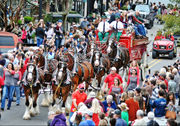 Clydesdales Ocean Springs appearance exceeds all expectations