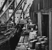 How an army of killer cats saved the Portland waterfront from '2-lb' wharf-rats in early 1900s