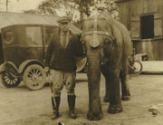 They all asked for Itema: Remembering the Audubon Zoo's beloved elephant