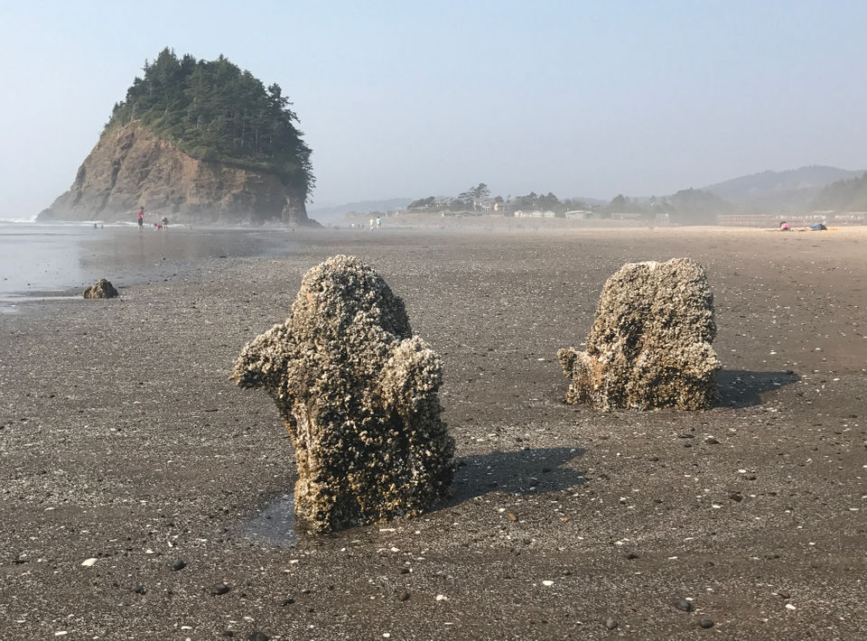 10 Low Tide Treasures On The Oregon Coast Oregonlive