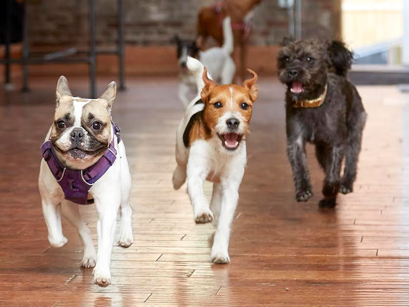 10 pet stores that are uniquely Upstate NY | NewYorkUpstate com