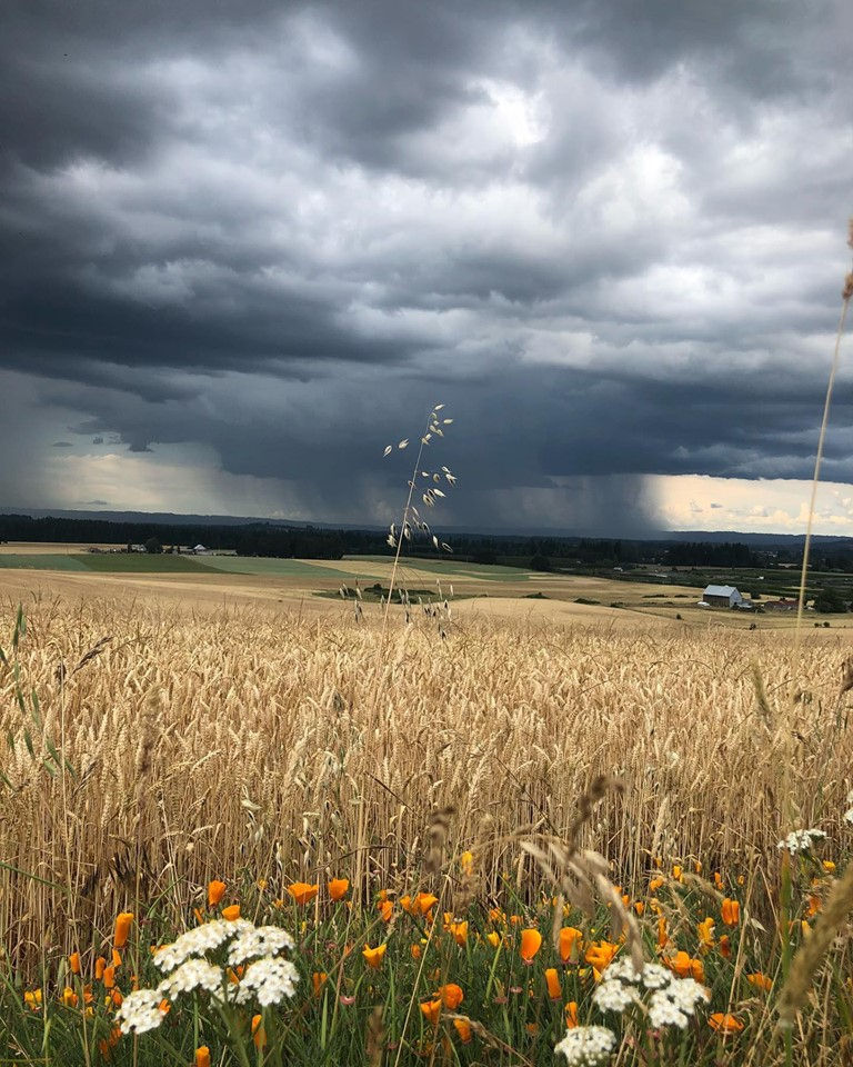 Portland metro Friday weather: Clouds and occasional light rain