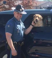 Massachusetts State Police trooper lures pooch off Worcester highway using homemade deer jerky
