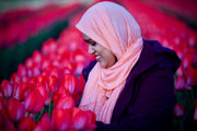 Wooden Shoe Tulip Fest 2019: A million tulips from over a hundred varieties pack 40 acres