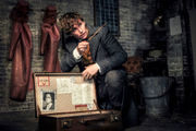 The 'Fantastic Beasts' and 'Harry Potter' movies, ranked