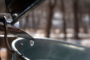 Colder nights and warmer days are the best conditions for the flow of sap.