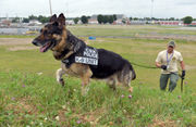 Police dogs converge on Big E for national workshops (photos, video)