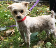N.J. pets in need: Nov. 19, 2018
