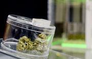 Medical marijuana dispensaries start opening across Bay County