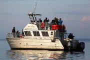 Suspend whale-watching tours, Washington task force advises