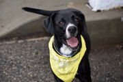 23 pets you can rescue this weekend on Staten Island: Feb. 24-25