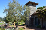 Yes, you can grow olive trees in Oregon; here's how: The Pecks