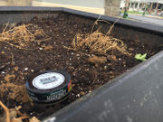 Ambassadors put in planters, thieves cleaned them out in Easton's West Ward
