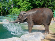 Animal artists' work for sale at Rosamond Gifford Zoo (photos)